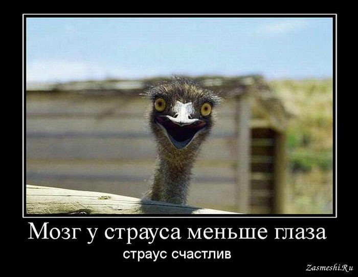 http://s9.uploads.ru/2YIQH.jpg