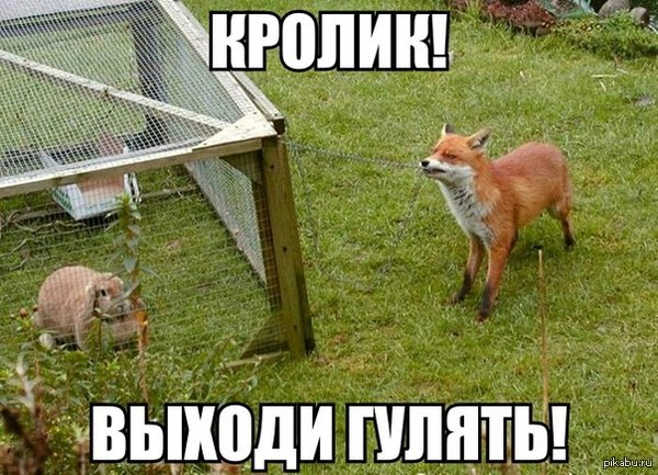 http://s9.uploads.ru/43zM1.jpg