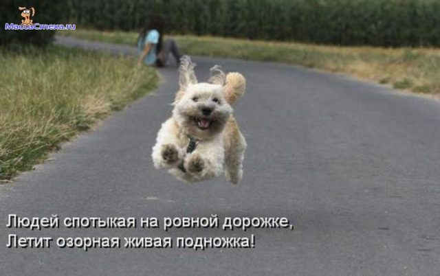http://s9.uploads.ru/4NPTS.jpg