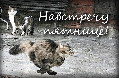 http://s9.uploads.ru/BWj1H.jpg