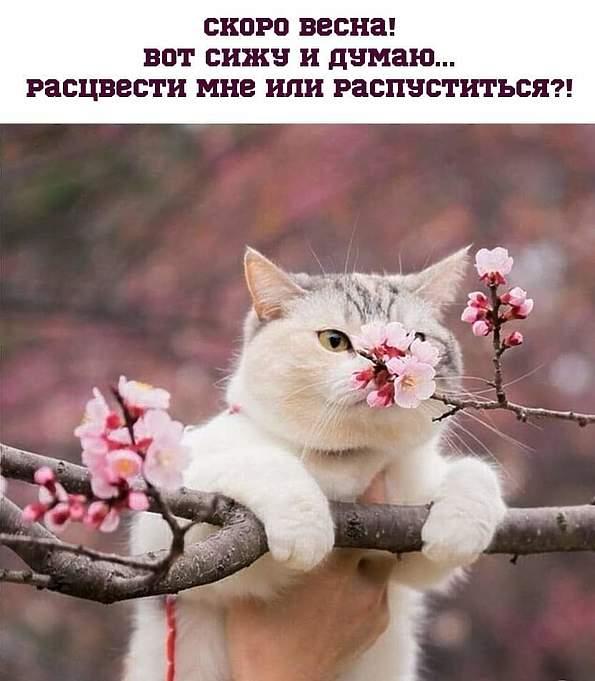 http://s9.uploads.ru/CnVia.jpg