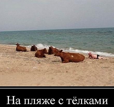 http://s9.uploads.ru/EOkjQ.jpg