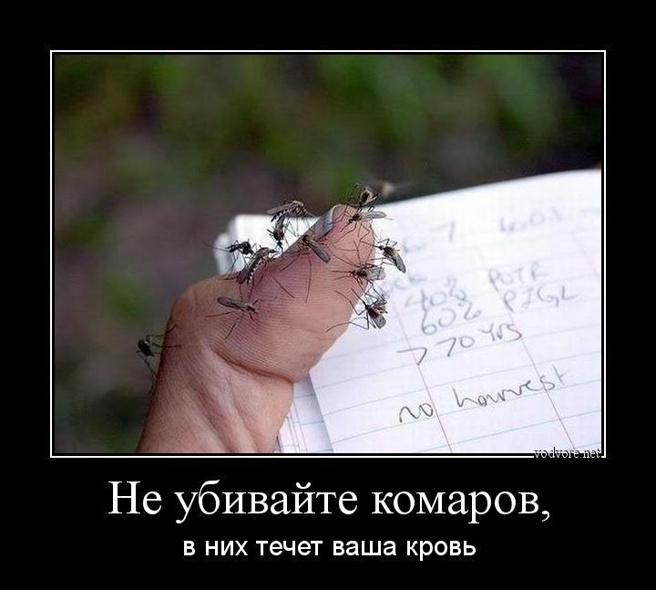 http://s9.uploads.ru/Em5cU.jpg