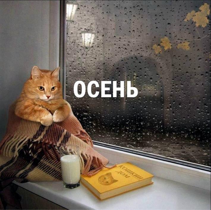 http://s9.uploads.ru/FlCOz.jpg