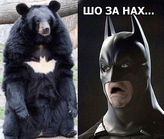 http://s9.uploads.ru/GADFa.jpg