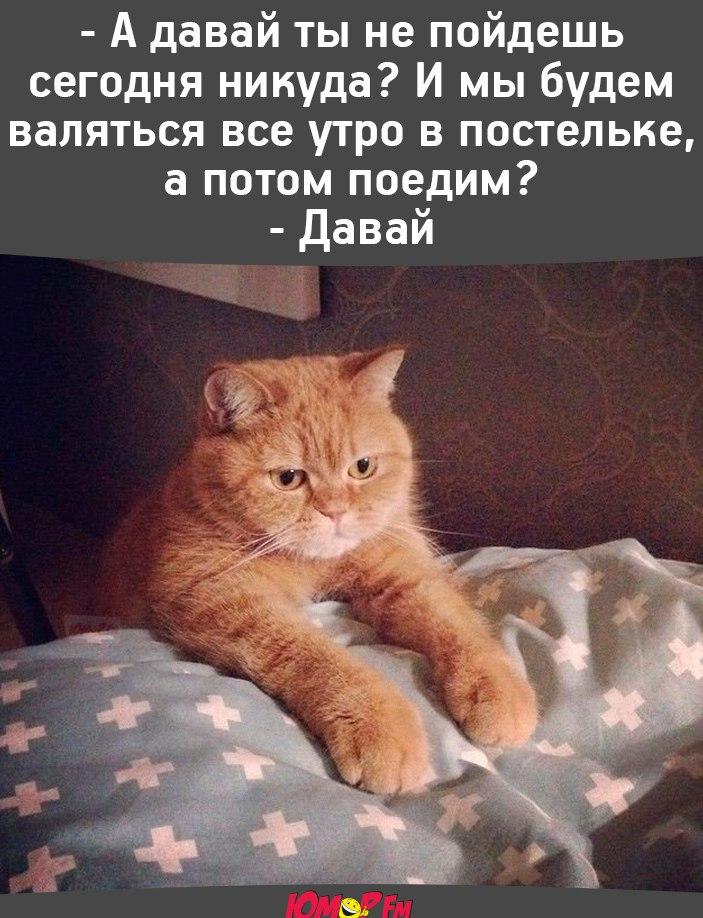 http://s9.uploads.ru/H9ZVS.jpg