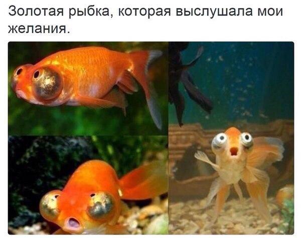 http://s9.uploads.ru/Ivb0M.jpg