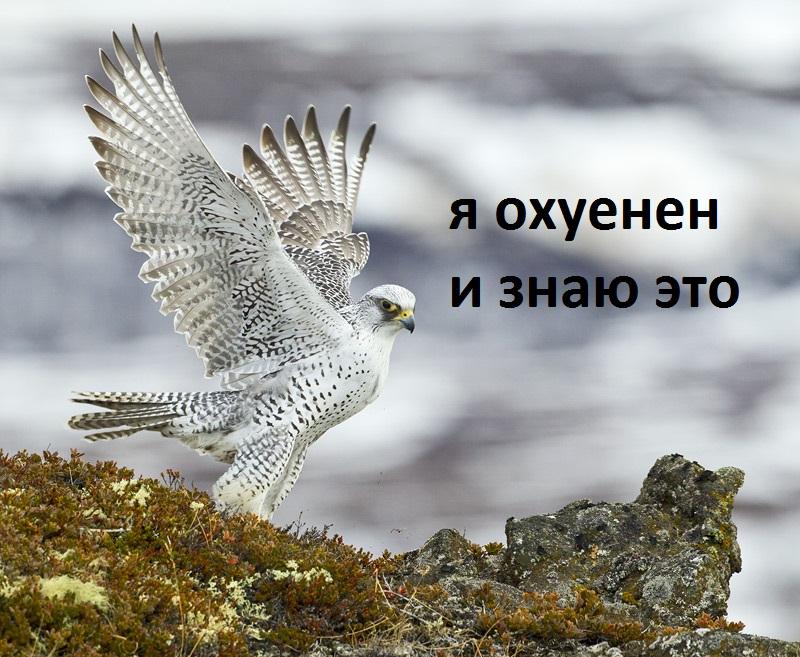 http://s9.uploads.ru/KRcns.jpg