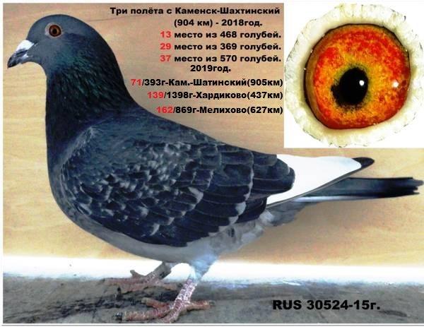http://s9.uploads.ru/NzBGA.jpg