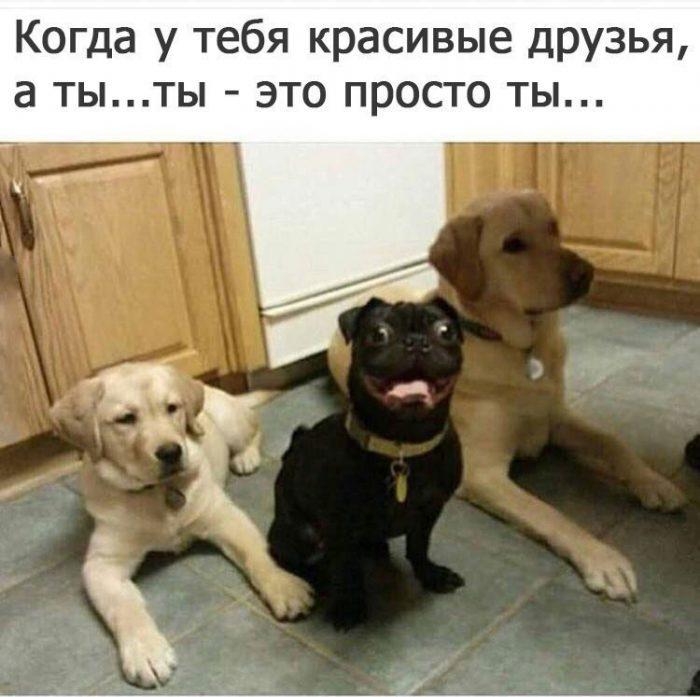 http://s9.uploads.ru/PfoaG.jpg
