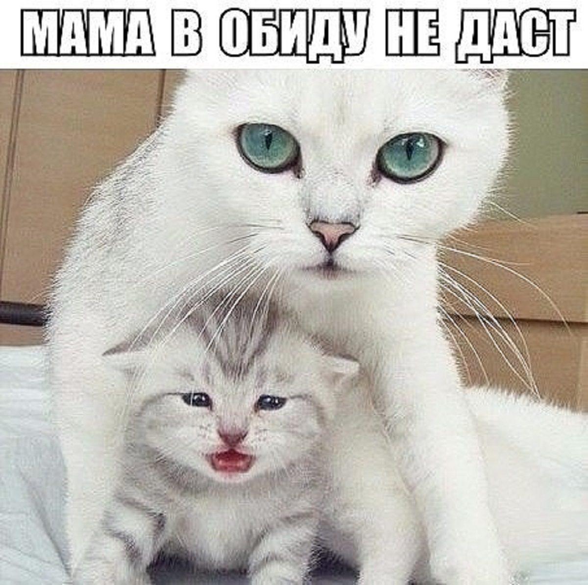 http://s9.uploads.ru/RYTX3.jpg