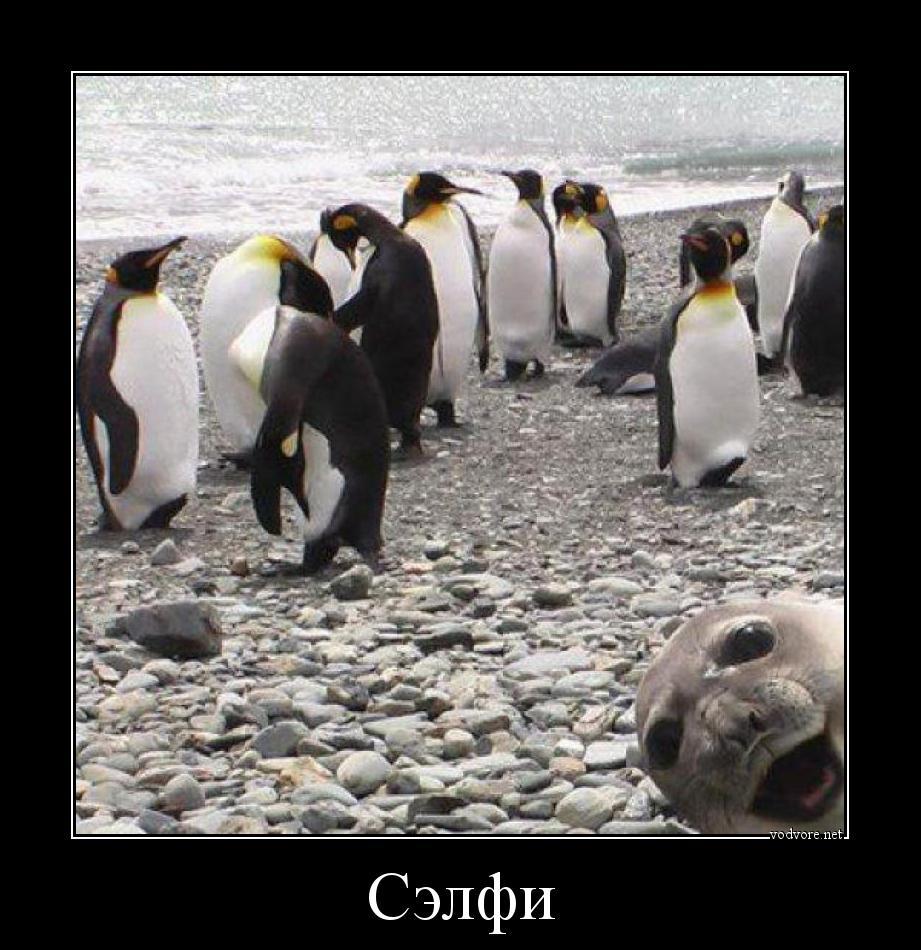 http://s9.uploads.ru/SYRhC.jpg