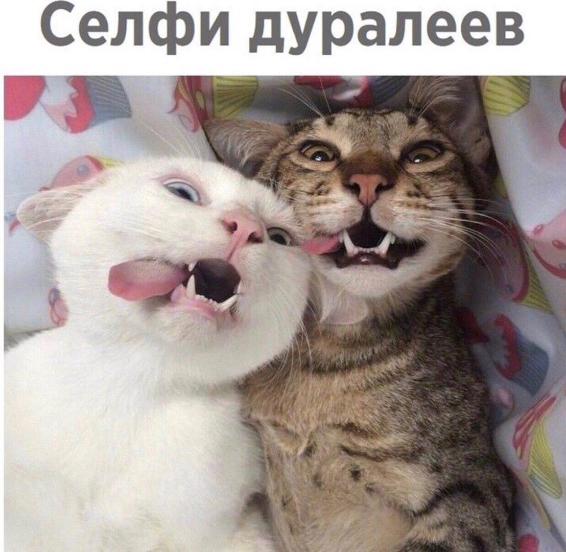 http://s9.uploads.ru/Wncyr.jpg