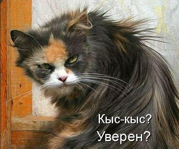 http://s9.uploads.ru/XlpQd.jpg
