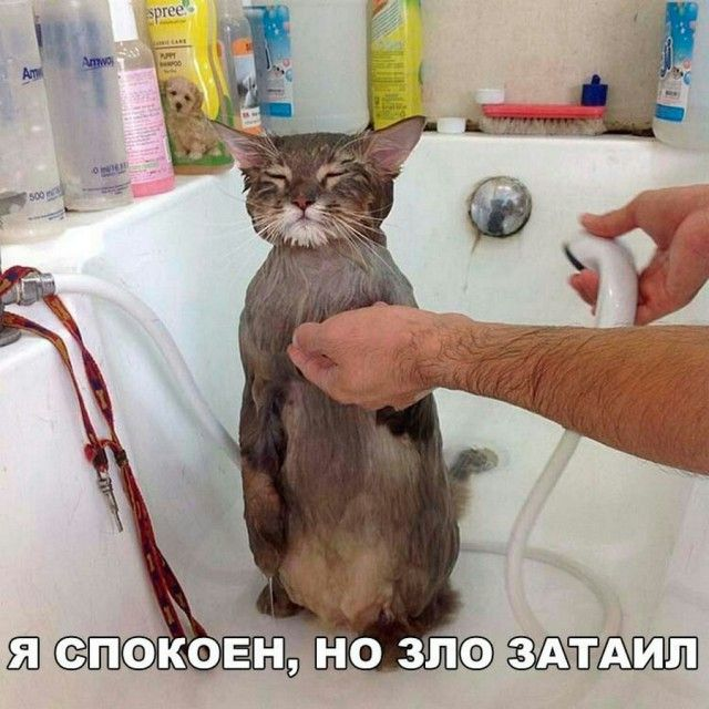 http://s9.uploads.ru/Y9B7H.jpg