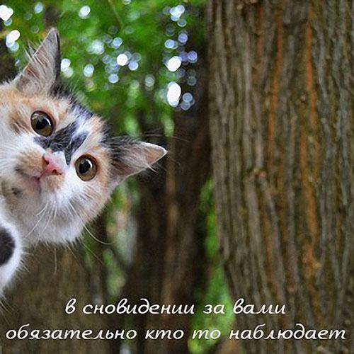 http://s9.uploads.ru/YGnj4.jpg
