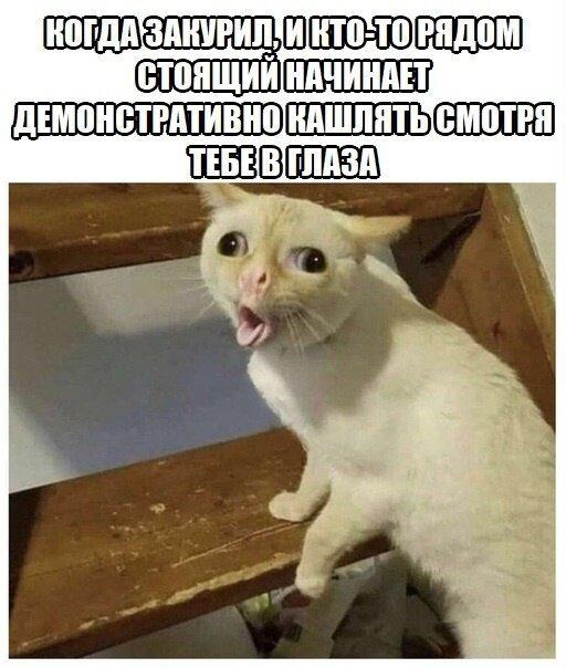 http://s9.uploads.ru/ZCDsR.jpg