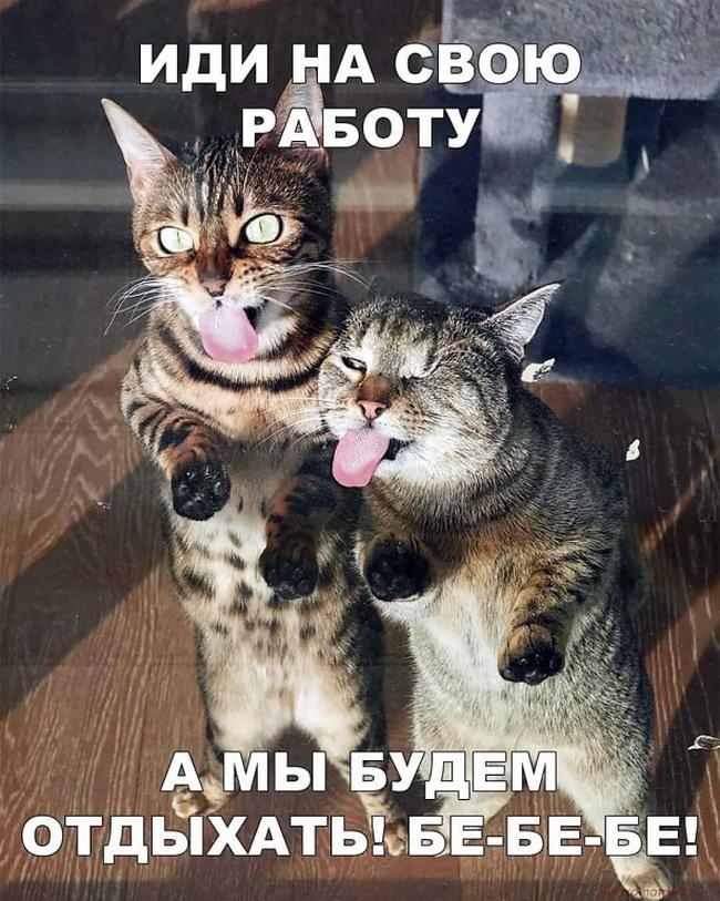 http://s9.uploads.ru/dJKj4.jpg