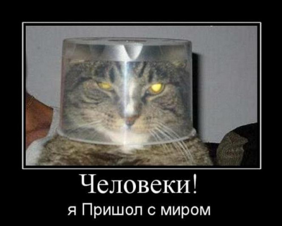 http://s9.uploads.ru/dmlSD.jpg