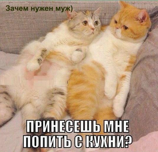 http://s9.uploads.ru/fTdC7.jpg