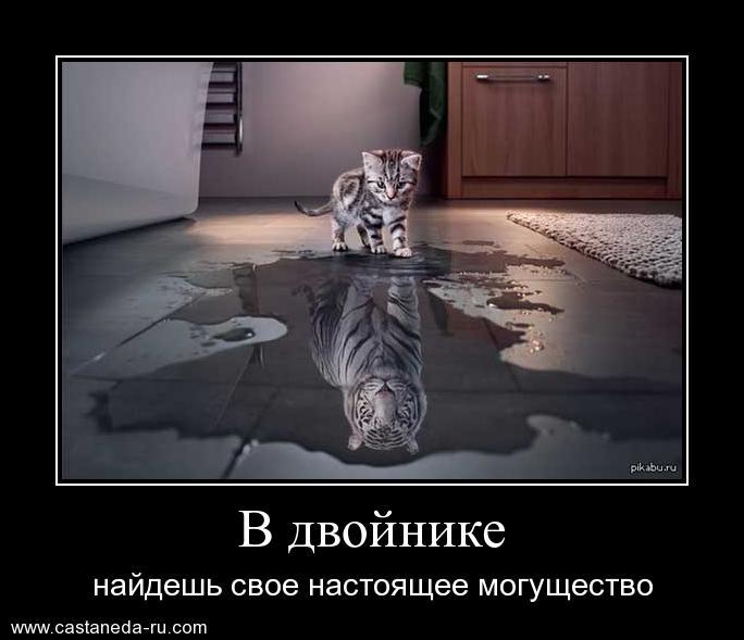 http://s9.uploads.ru/hX9UW.jpg