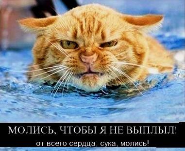 http://s9.uploads.ru/jwey3.jpg