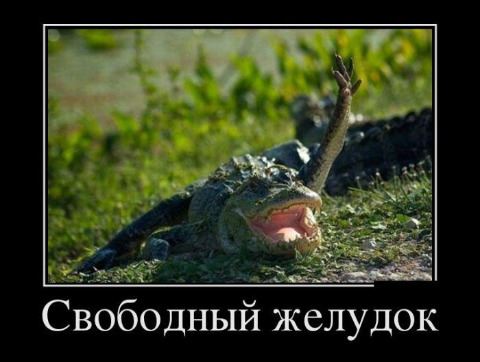 http://s9.uploads.ru/knq4e.jpg