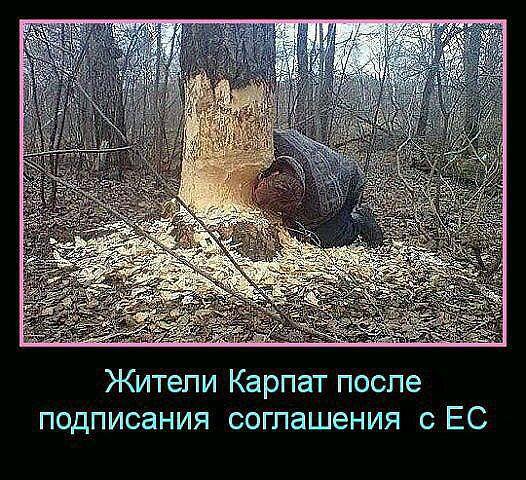 http://s9.uploads.ru/lZV2I.jpg