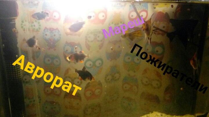 http://s9.uploads.ru/mUwXZ.jpg