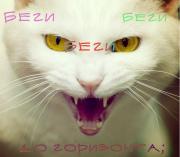 http://s9.uploads.ru/r0qO3.jpg