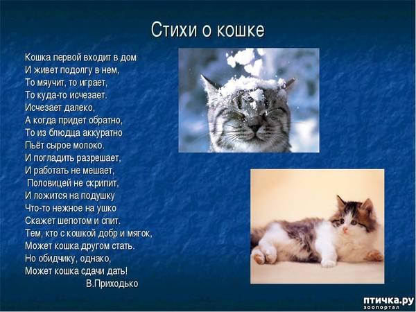 http://s9.uploads.ru/t/1EV24.jpg