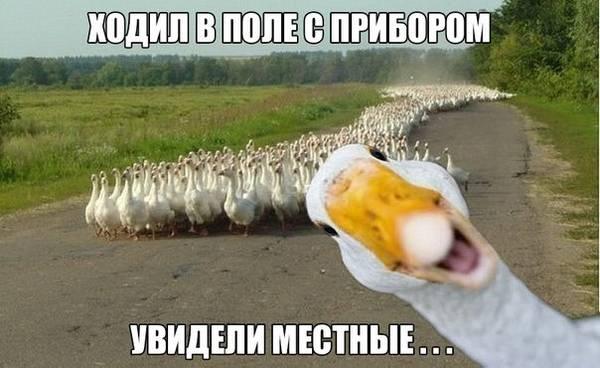http://s9.uploads.ru/t/1Mcqj.jpg