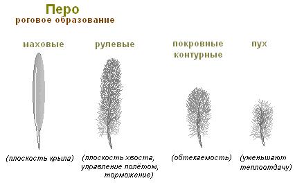 http://s9.uploads.ru/t/3BSjR.png