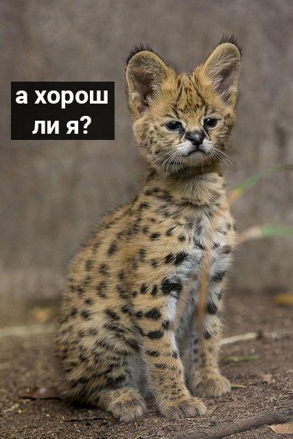 http://s9.uploads.ru/t/3ih6J.jpg