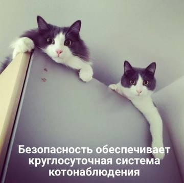 http://s9.uploads.ru/t/4sphA.jpg