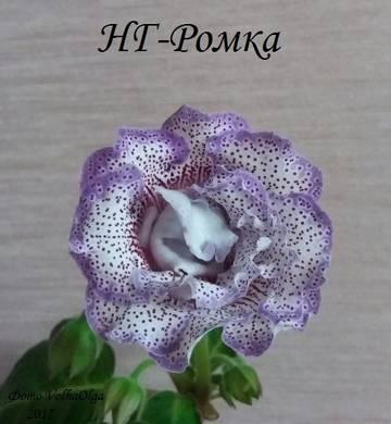 http://s9.uploads.ru/t/6hLgY.jpg