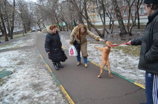 http://s9.uploads.ru/t/6zGHL.jpg