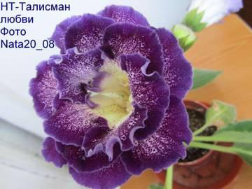 http://s9.uploads.ru/t/91Vxg.jpg