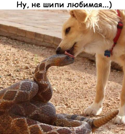 http://s9.uploads.ru/t/98QMy.jpg