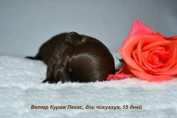 http://s9.uploads.ru/t/9NZ5f.jpg