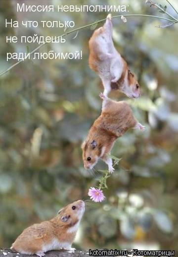 http://s9.uploads.ru/t/9rZjL.jpg