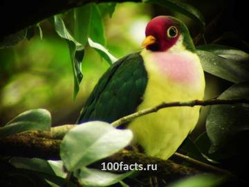 http://s9.uploads.ru/t/AzZxk.jpg