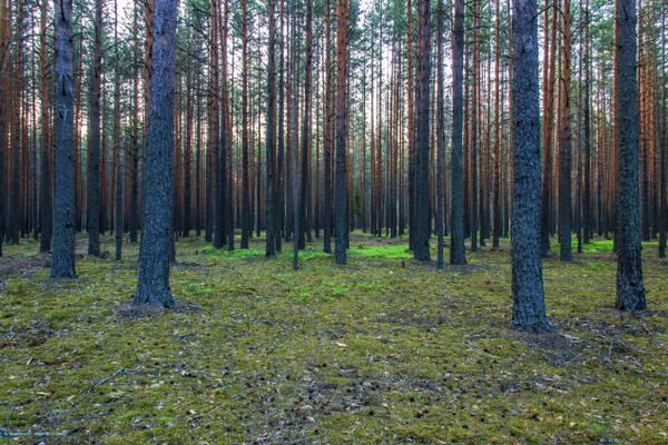 http://s9.uploads.ru/t/Bogka.jpg