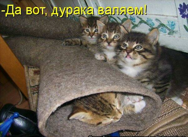 http://s9.uploads.ru/t/Ce0Sa.jpg