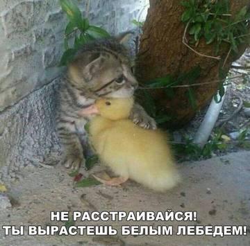 http://s9.uploads.ru/t/Cxcnf.jpg