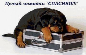 http://s9.uploads.ru/t/EQi8U.jpg