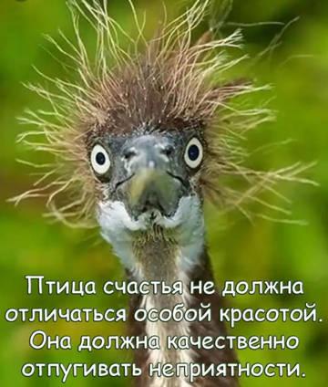 http://s9.uploads.ru/t/EhOKt.jpg