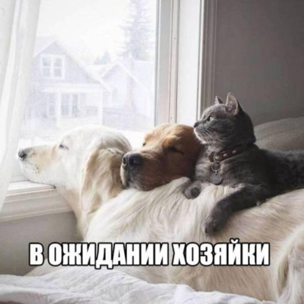 http://s9.uploads.ru/t/F3e4l.jpg