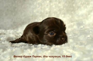 http://s9.uploads.ru/t/FxGzT.jpg