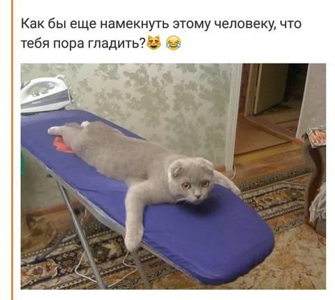 http://s9.uploads.ru/t/GS5uz.jpg